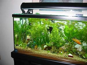 aquarium designs to suit your home ideas 4 homes With fish tank designs for home