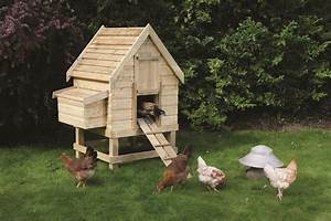 How To Build A Chicken Coop  Chicken Coops Designs