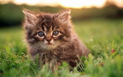 Kitten Desktop Wallpapers 4k