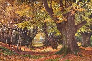 SURREY Beeches in Autumn Godalming vintage print 1912