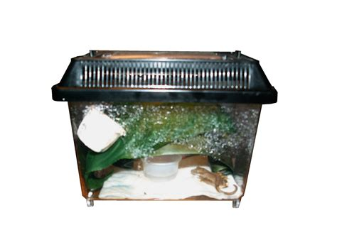 Crested Gecko Shed Box by Crested Gecko Care Page 214