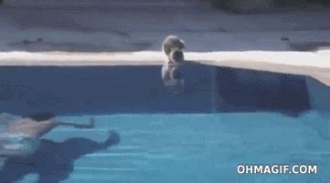 swimming pool gif find share  giphy