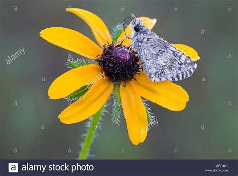 drohne fliegen englischer garten münchen best 228 ubende insekten stockfotos best 228 ubende insekten