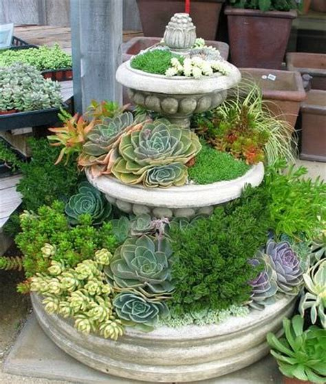 succulents nursery sedum and succulent planters the garden glove