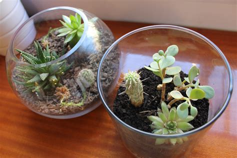 terrarium for beginners a simple and easy 6 step diy terranium plant