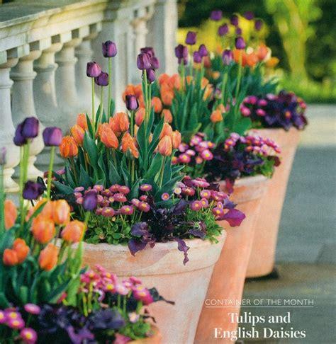 25 best ideas about purple tulips on pretty
