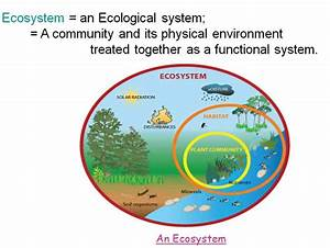 Ecosystem  Useful Notes On Our Ecosystem  With Diagram
