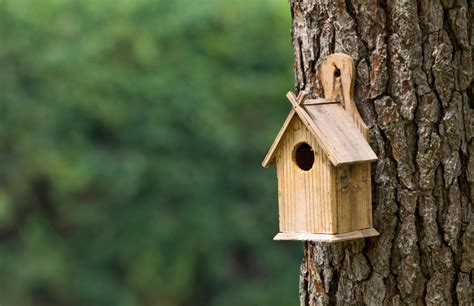 bird houses   backyard blains farm fleet blog