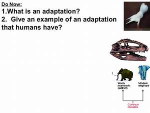 5.00 Animal adaptations