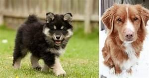 6 Cute Dog Breeds You've Never Heard Of