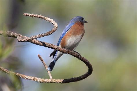 bird man of bridgewater perching birds of louisiana