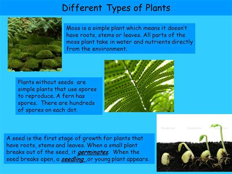 types of plants unit a chapter 1 types of plants vocabulary ppt video