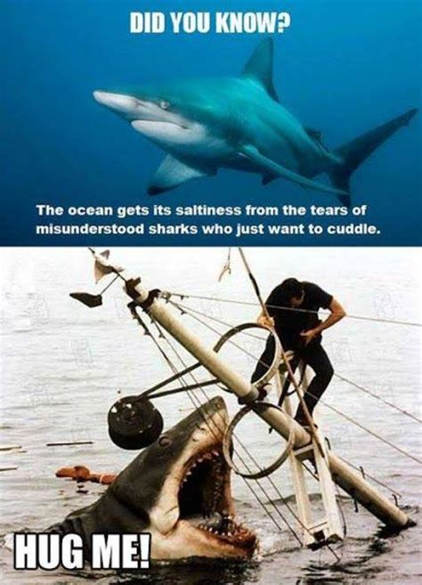 Funny Shark Meme - did you know this shark meme jokes memes pictures
