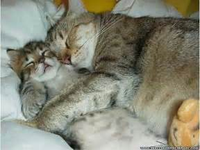 sleeping cat and sleeping cats pictures sepphoras