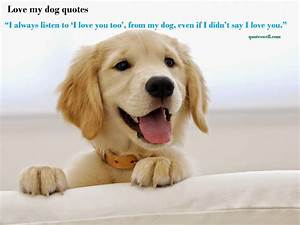 Cute Dog Pictures With Funny Sayings
