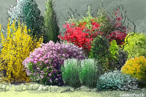 garden shrubs bright shrubs gardenpuzzle online garden planning tool