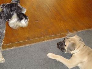 introducing a new puppy to an older dog holidays4dogs With how to introduce a puppy to an older dog
