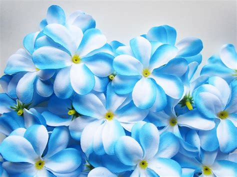blue and white flowers names blue flowers names and meanings 13 cool hd wallpaper hdflowerwallpaper com