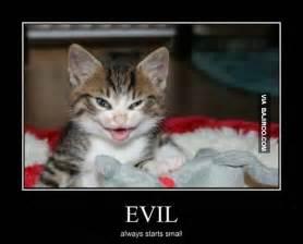 evil cats evil cat meme cat planet cat planet