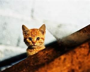 Katze, -, Piqs, De