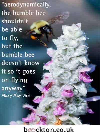 aerodynamically  bumble bee shouldnt    fly