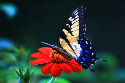 Background Computer Desktop Free Wallpaper Butterfly