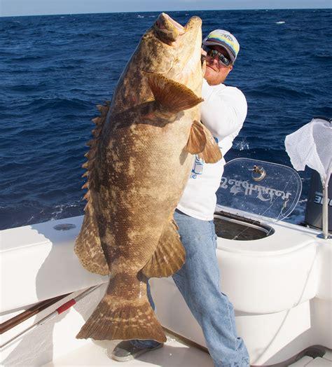grouper gulf mexico goliath fishing fish florida identification west charter reef delph charters key captain keys