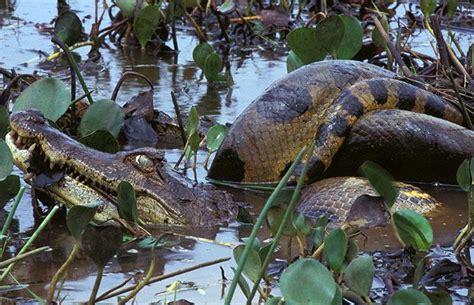 Animales cazando y comiéndose a otros Blogodisea