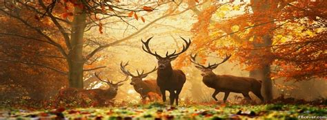 Autumn Deer In The Forest Facebook Cover Photo - FBcover.com