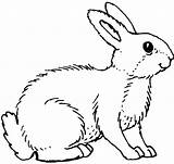 Coloring Rabbit Printable Pages sketch template