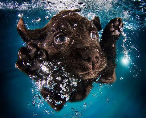 Suņu fotogrāfs pierāda - kucēni zem ūdens ir divtik mīlīgi ...