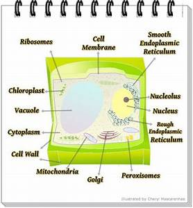 48 Fresh Plant Cell Flow Chart