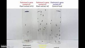 Parkinson's Disease Experiment with Drosophila. Marshall ...