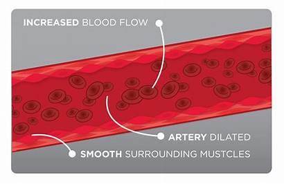 Blood Vessel Prime Activator Qivana System Cycle