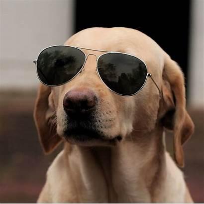 Funny Dog Sunglasses Wearing