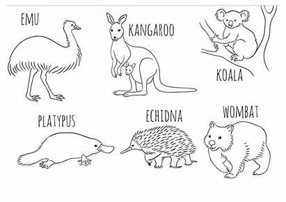 Animals Colouring Coloring Australian Australia Animal Activities
