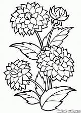 Coloring Peonies Flower Peony Colorkid sketch template