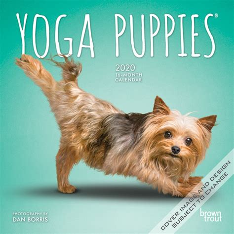 yoga puppies monthly mini wall calendar animals humor
