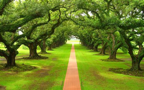 大自然的绿色美景图片壁纸大全-ZOL桌面壁纸