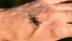 Faire Fuir Les Araignées : piq re d 39 araign e que faire en cas de gonflement ~ Melissatoandfro.com Idées de Décoration