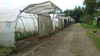 mudah membuat greenhouse rumah hijau pabrik