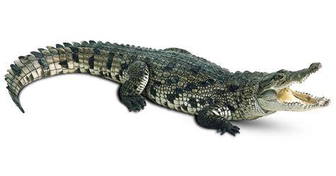 Alligator and Crocodile Facts