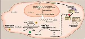 Metabolism Winter 2013 Study Guide  2013