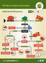 Oil Palm Or Palm Oil Images