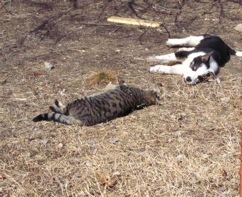 Hickmama Dead Cats