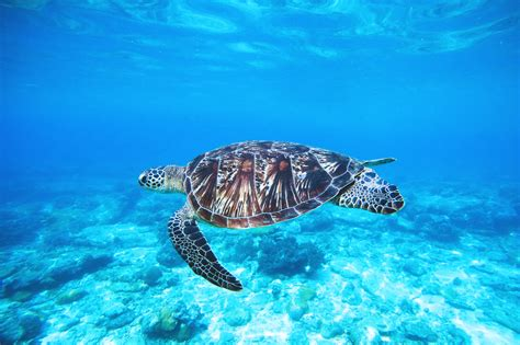 Re Zero Wallpaper Hd Ocean Turtle Free Photo Iso Republic