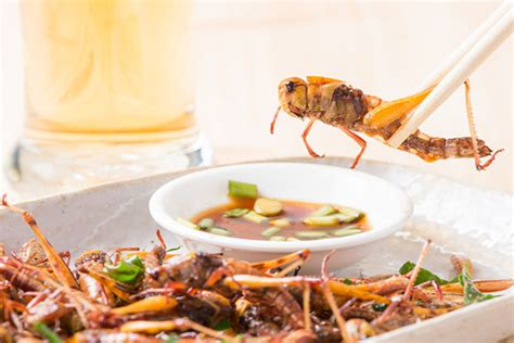 cookout insect recipes terminix blog