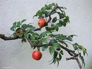 Künstliche Zweige Für Bodenvase : apfelbaum zweige f r k nstliche b ume ~ Orissabook.com Haus und Dekorationen