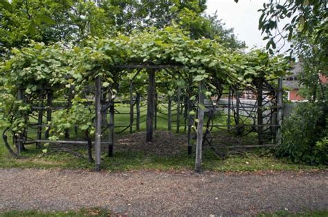 grape vine trellis grapevine trellis ideas search cultivate your