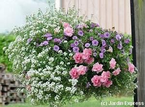 Jardiniere Fleurie Plein Soleil : 5 compositions pour une jardini re fleurie l t prochain ~ Melissatoandfro.com Idées de Décoration